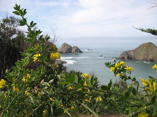 The Pacific coast.