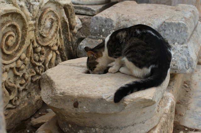 One of many cats roaming the ancient city
