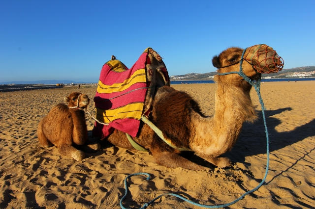 Although we opted not to go for a ride, my husband was given permission to take this photo on the beach in Tangier