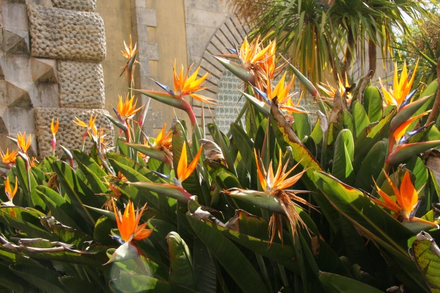 As we took pictures and waited to get in, I couldn't help but admire the many blossoming Birds of Paradise.